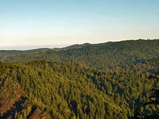 Views over Big Basin Redwoods State Park from Pine Mountain