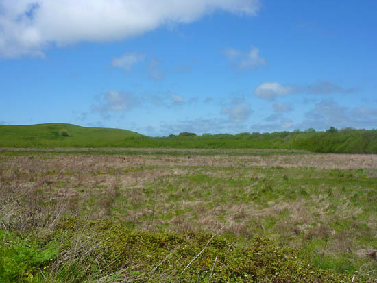 Olema Marsh and the Giacomini Wetlands Restoration Area