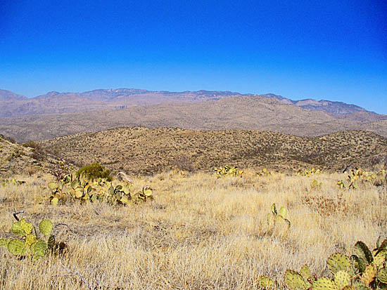 The Douglas Spring Trail rises above the Cactus Forest into Desert Grassland and Chaparral