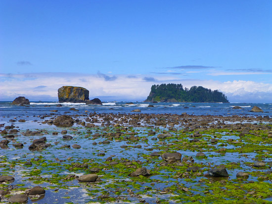 Sea stacks along the Ozette Coast Loop