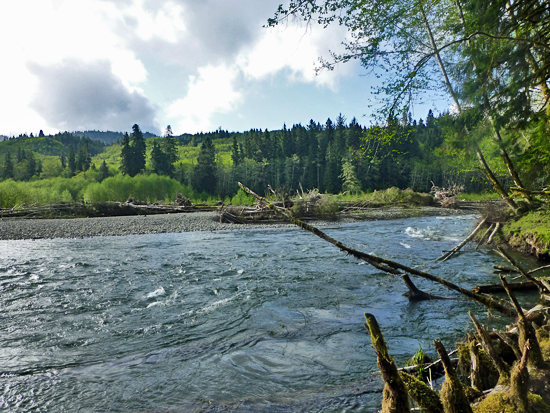 The Bogachiel River in Olympic National Park